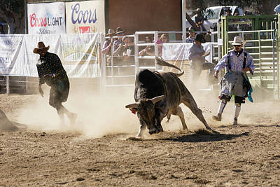 Photograph - Bull by John Swartz