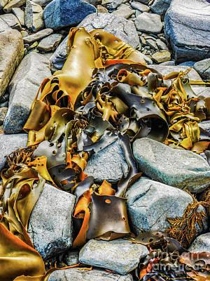 Bull Kelp On Blue Rocks Art Print by Lexa Harpell