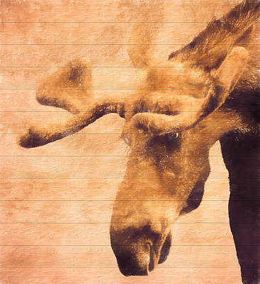 Teton Mixed Media - Bull Moose Barn Door by Dan Sproul