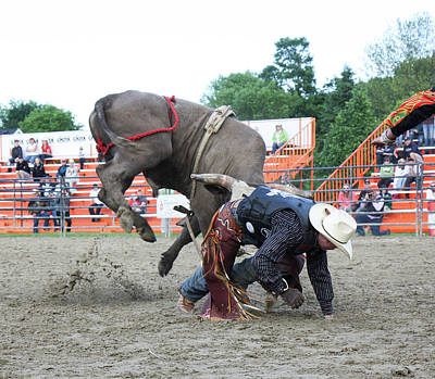 Photograph - Bull Riding Action by Nick Mares