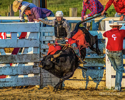 Photograph - Bull Riding At Cowtown by Nick Zelinsky