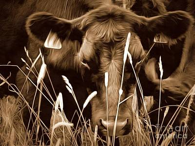 Photograph - Bull - Sepia Brown Black Angus by Janine Riley