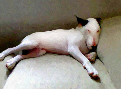 Bull Terrier Sleeping Art Print by Michael Tompsett