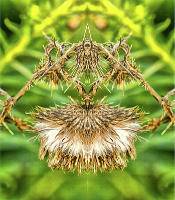 Photograph - Bull Thistle 3 Pareidolia by Constantine Gregory