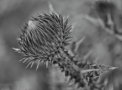 Photograph - Bull Thistle Bw by Rick Mosher