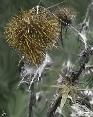 Photograph - Bull Thistle Fall by Wayne King