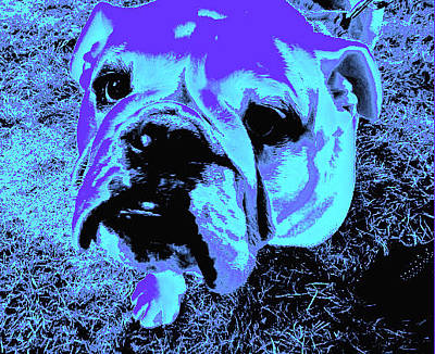 Photograph - Bulldog #3 by Anne Westlund