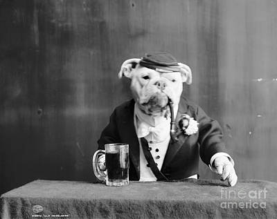 Beer Photograph - Bulldog, C1905 by Granger