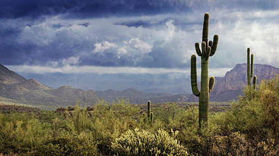 Photograph - In The Sonoran  by Saija Lehtonen