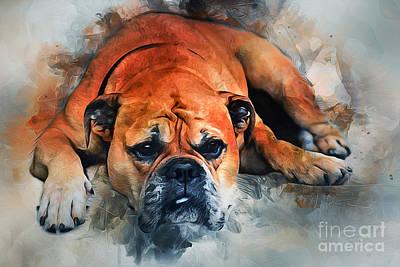 Pyrography - Bulldog by Ian Mitchell