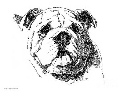 Drawing - Bulldog-portrait-drawing by Gordon Punt