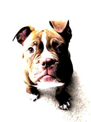 Canines Digital Art - Bulldog Puppy by Michael Tompsett