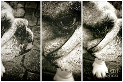 Digital Art - Bulldog Eyes by John Rizzuto