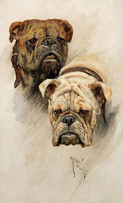 Sniffing Painting - Bulldogs by Arthur Wardle