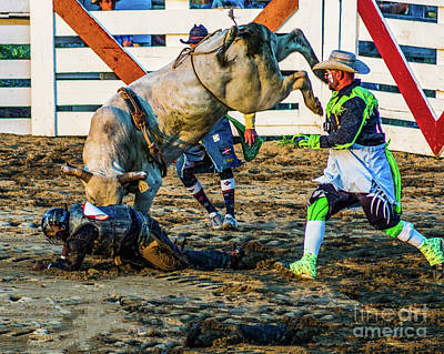Photograph - Bullfighter To The Rescue by Nick Zelinsky