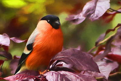 Photograph - Bullfinch In Autumn by Georgiana Romanovna