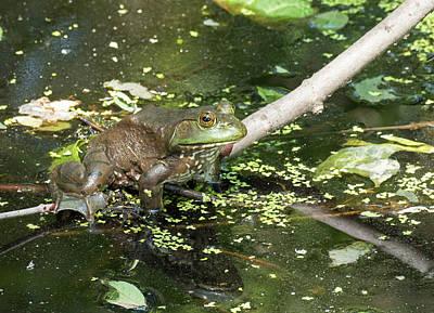 Photograph - Bullfrog And His Little Friend by Bill Jordan