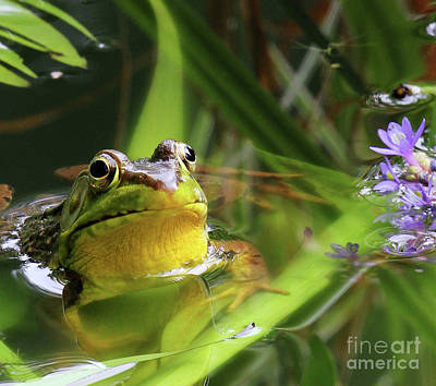 Flowers Photograph - Bullfrog And The Pickeral by Jennifer Robin