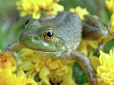 Photograph - Bullfrog Baby by Rebecca Overton