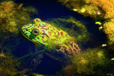 Photograph - Bullfrog  by Dee Browning