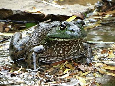 Photograph - Bullfrog by Rebecca Overton