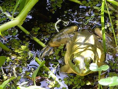 Photograph - Bullfrog by Terri Mills