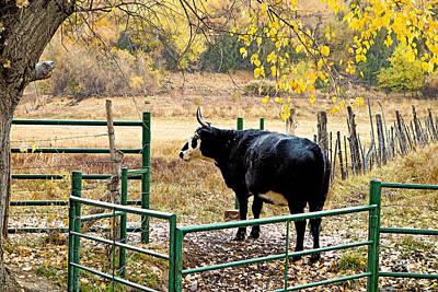 Photograph - Bullish On Autumn by Robert Meyers-Lussier