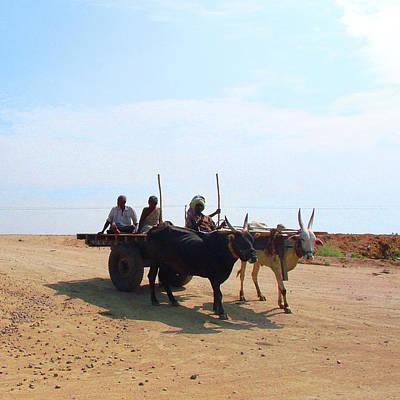 Photograph - Bullock Cart Near Dhone, Andhra Pradesh, India by Iqbal Misentropy