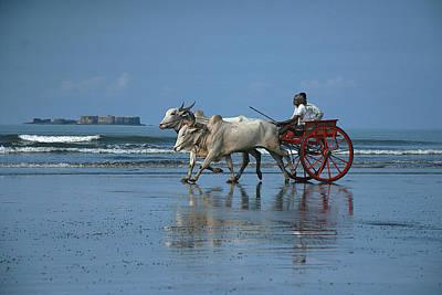 Bullock-cart Racing Original by Sydney Alvares