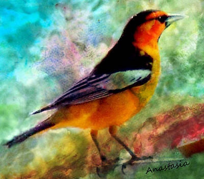 Digital Art - Bullock's Oriole Mountain Birds by Anastasia Savage Ealy