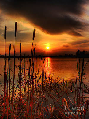Kim Digital Art - Bullrush Sunset by Kim Shatwell-Irishphotographer