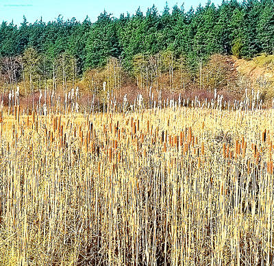 Photograph - Bullrushes In Late November by Tobeimean Peter