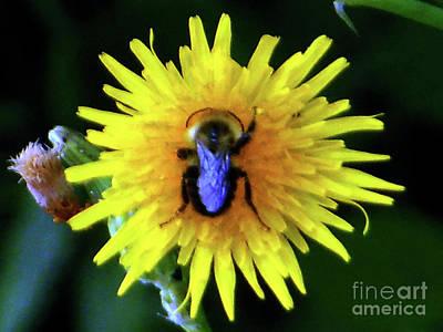 Bullseye Bumblebee Dandelion Art Print