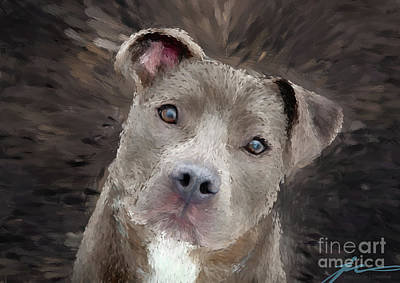 Wall Art - Digital Art - Bully Pup by Julie Clyde