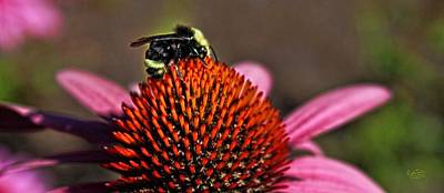 Caravaggio - Bumble Bee and Flower by Rick Lawler