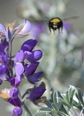 Photograph - Bumble Bee by Dean Ferreira