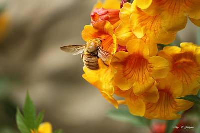 Photograph - Bumble Bee Fiesta by Amy Gallagher
