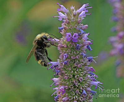 Photograph - Bumble Bee by Gary Wing