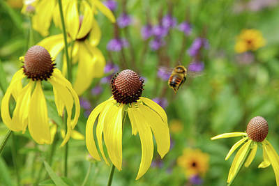 Photograph - Bumble Bee Heaven by Janice Adomeit