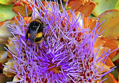 Photograph - Bumble Bee On Artichoke Flower by Nareeta Martin