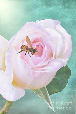Digital Art - Bumble Bee On Pastel Pink Rose by Janette Boyd