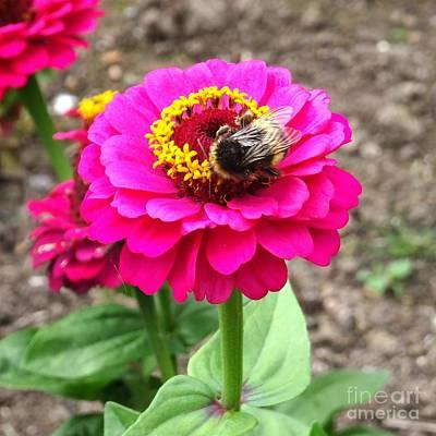Photograph - Bumble Bee On Pink Flower by Karen Jane Jones
