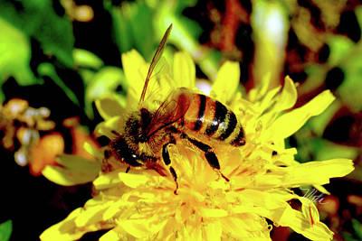 Photograph - Bumble Bee On Yellow Flower by Meta Gatschenberger