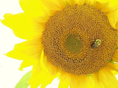 Photograph - Bumble Bee Sunflower by Lisa Gilliam