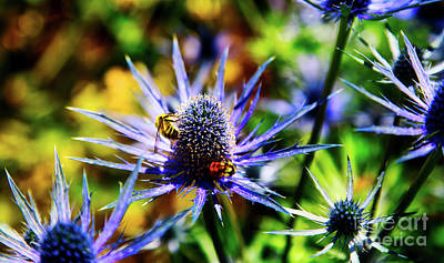 Photograph - Bumble Bees On Sea Holly Flower by Bruce Block