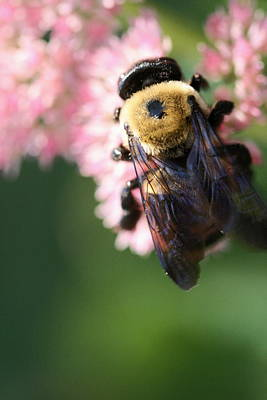 Photograph - Bumble From Above by Angela Rath
