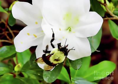 Photograph - Bumblebee by D Hackett
