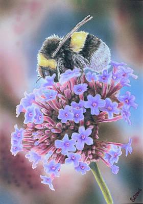 Bumblebee Drawing - Bumblebee by Eveline Van Dooren
