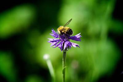 Photograph - Bumblebee Kisses by Lisa Knechtel