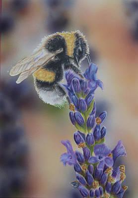 Bumblebee Drawing - Bumblebee Nr3 by Eveline Van Dooren